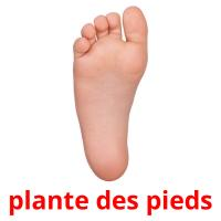plante des pieds card for translate