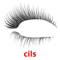 cils picture flashcards