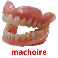 machoire picture flashcards