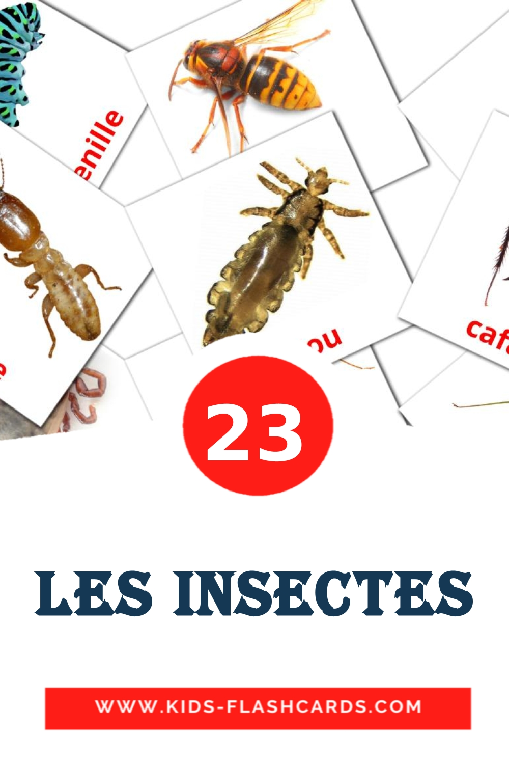 23 Insectes Picture Cards for Kindergarden in french