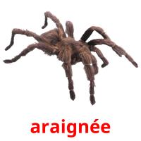 araignée picture flashcards