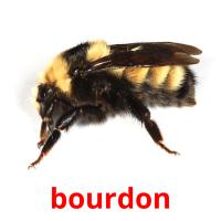 bourdon picture flashcards