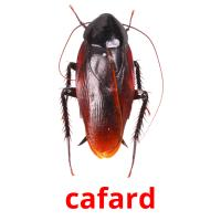 cafard picture flashcards