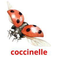 coccinelle picture flashcards