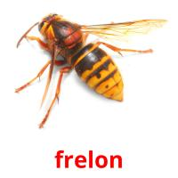 frelon picture flashcards