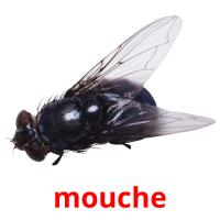 mouche picture flashcards