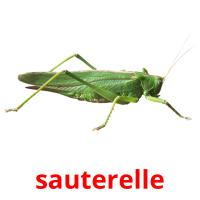 sauterelle picture flashcards