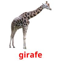 girafe picture flashcards
