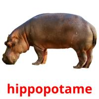 hippopotame picture flashcards