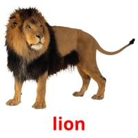lion picture flashcards