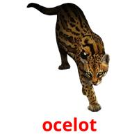 ocelot picture flashcards