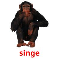 singe picture flashcards
