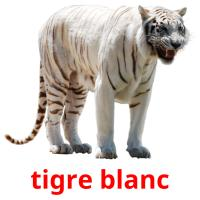 tigre blanc picture flashcards