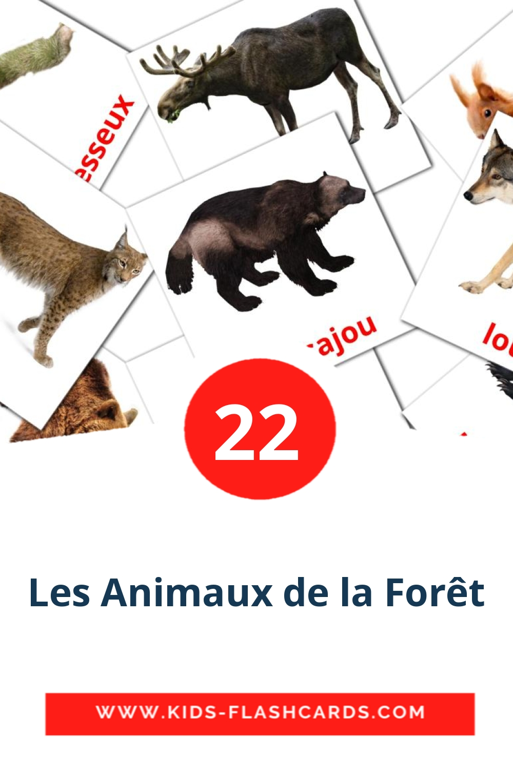 22 Animaux de la forêt Picture Cards for Kindergarden in french
