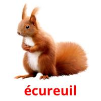 écureuil picture flashcards