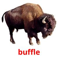 buffle picture flashcards