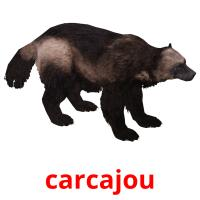 carcajou picture flashcards