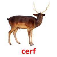 cerf picture flashcards