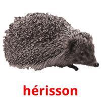 hérisson picture flashcards