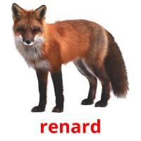 renard picture flashcards