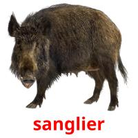 sanglier picture flashcards