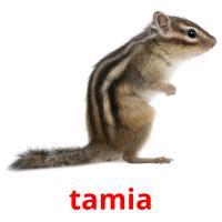 tamia picture flashcards