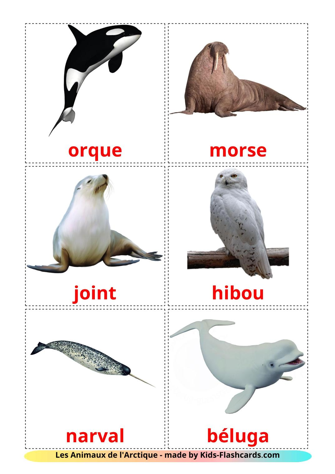 Arctic animals - 14 Free Printable french Flashcards