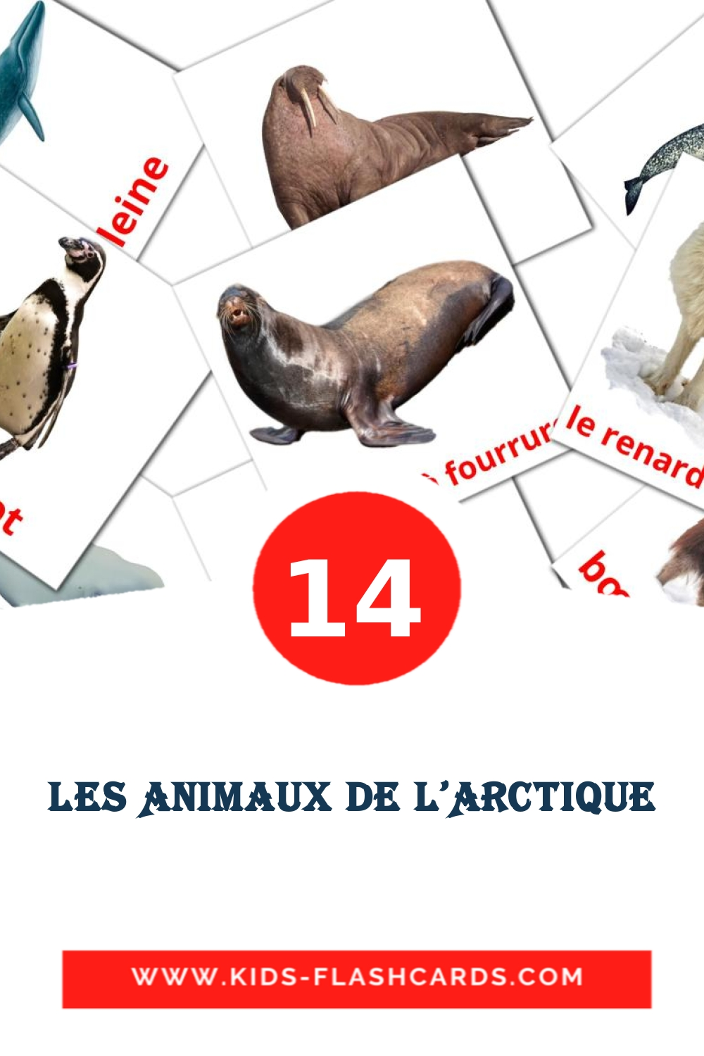 14 Animaux de l'Arctique Picture Cards for Kindergarden in french
