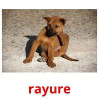 rayure picture flashcards