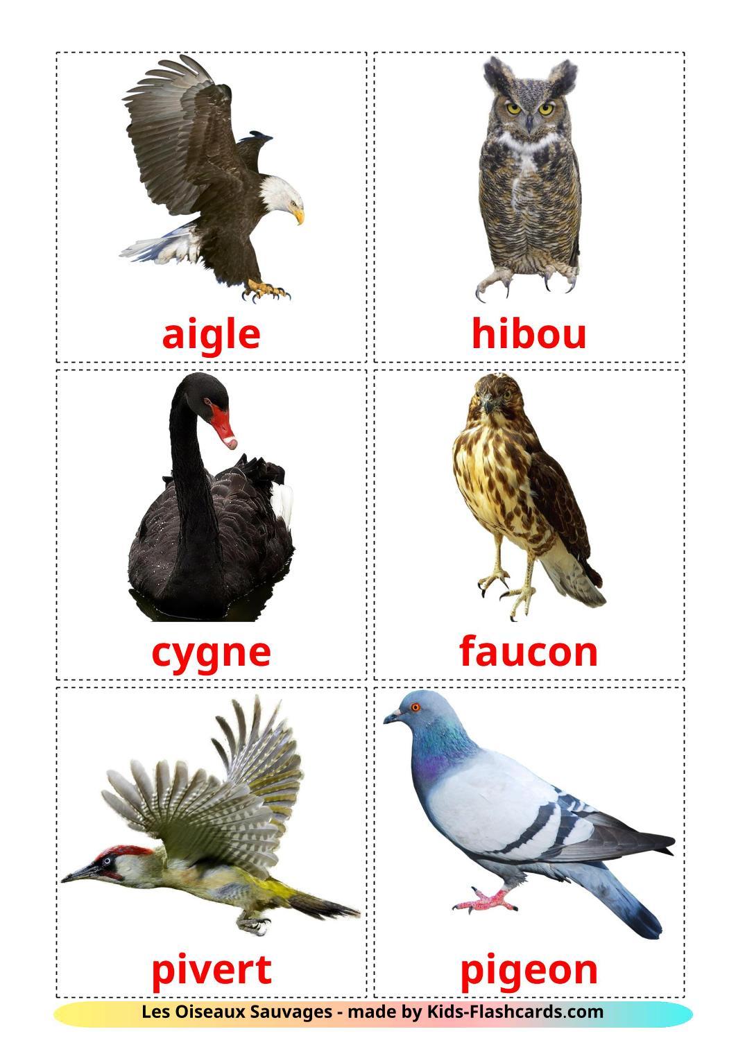 Wild birds - 18 Free Printable french Flashcards