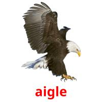 aigle picture flashcards