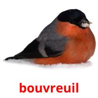 bouvreuil picture flashcards