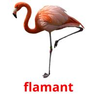 flamant picture flashcards