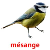 mésange picture flashcards