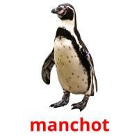 manchot picture flashcards