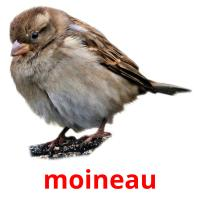 moineau picture flashcards