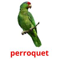 perroquet picture flashcards