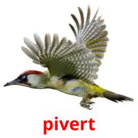 pivert picture flashcards