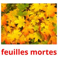 feuilles mortes picture flashcards