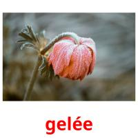 gelée picture flashcards