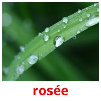 rosée picture flashcards
