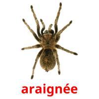 araignée picture flashcards