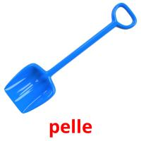 pelle picture flashcards
