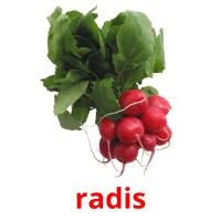 radis picture flashcards