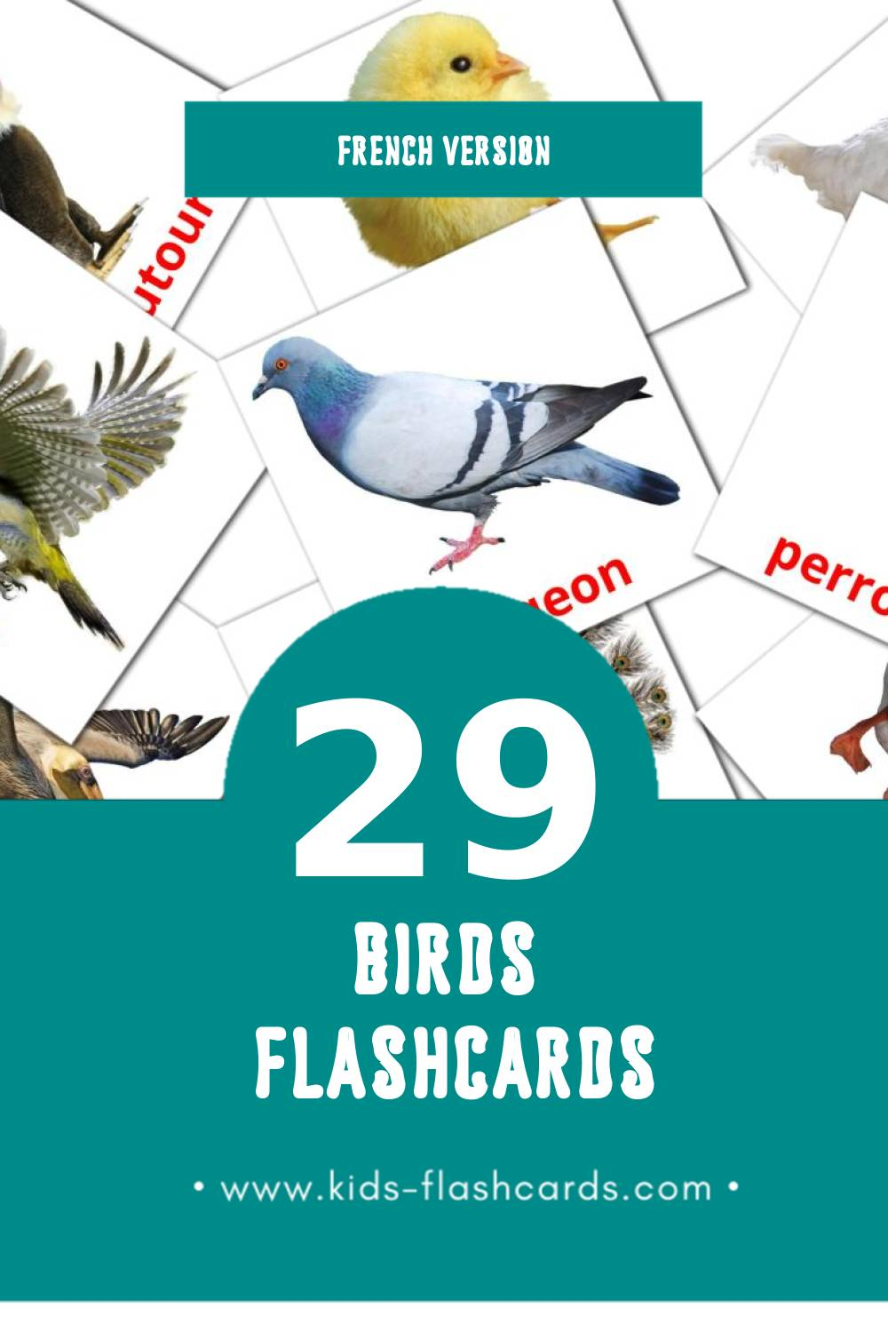 Visual Des oiseaux Flashcards for Toddlers (29 cards in French)
