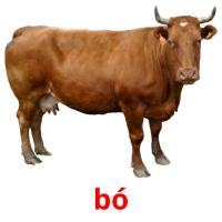 bó picture flashcards