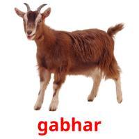 gabhar picture flashcards