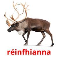réinfhianna picture flashcards
