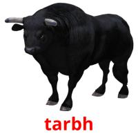 tarbh picture flashcards