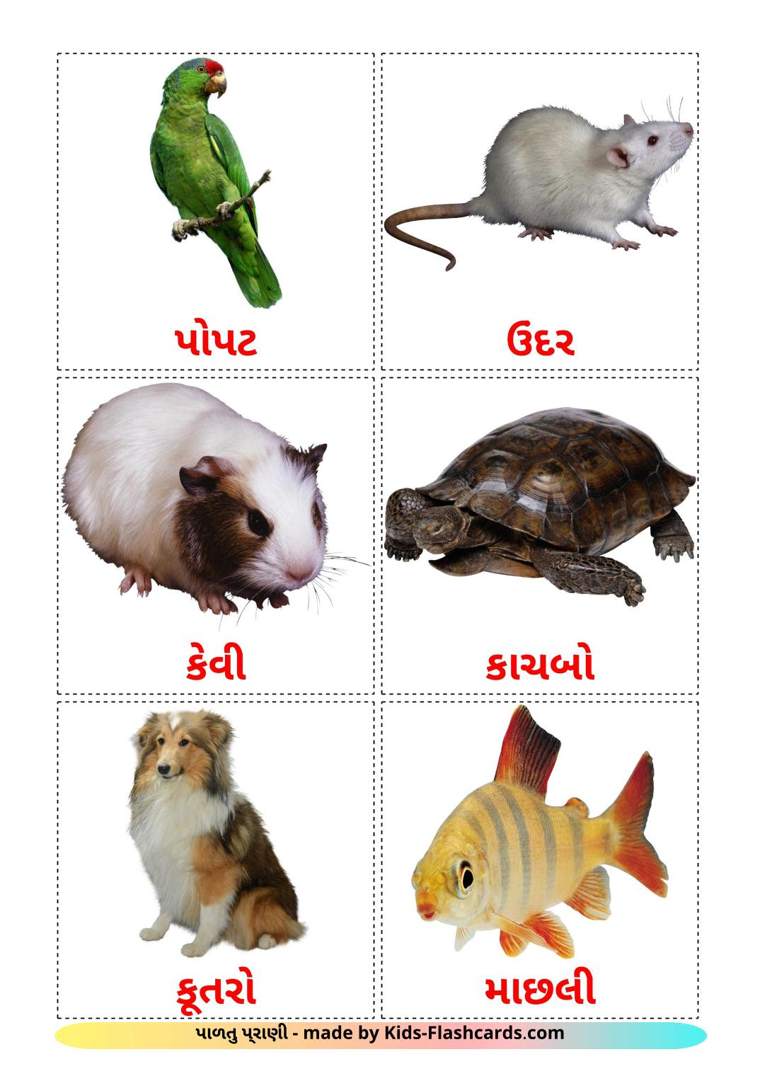 Domestic animals picture cards for Kindergarden in gujarati
